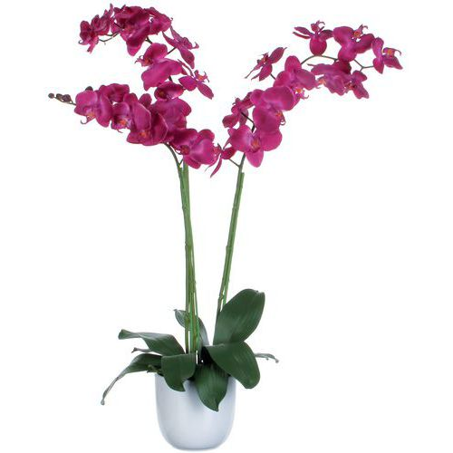Phalaenopsis orchidée 100 cm