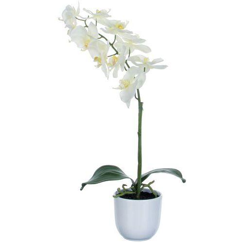 Phalaenopsis orchidée 60 cm