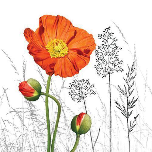 Lot de 20 serviettes  Fleur de Pavot Orange! -BRAUN COMPANY